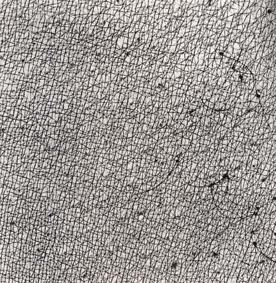 Skin series cytogram 183 x 183 cm 1973